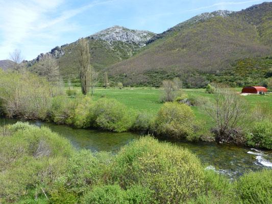 narcissenveld met ooievaar