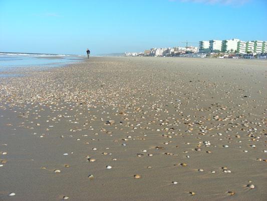 strand Matalascanas