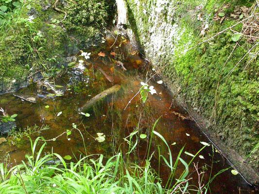 poeltje primair habitat
