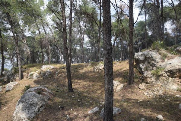 bosbiotoop op Mount Gilboa