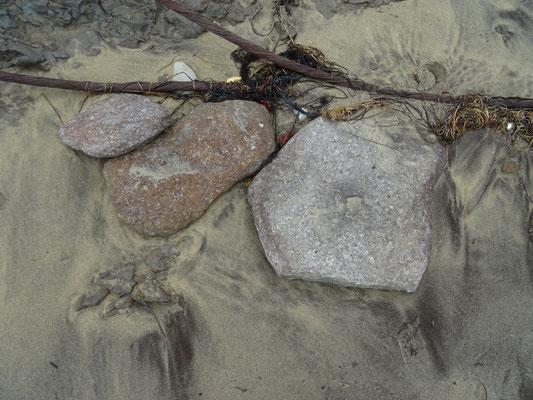 Gesteente vol met schelpen(schalie)