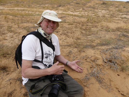 Martin met Acanthodactylus scutellatus