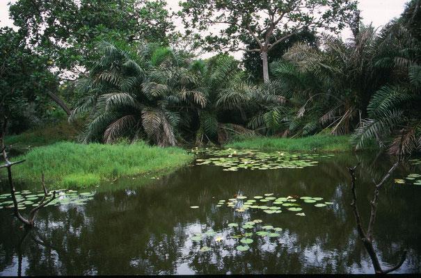 Abuko Nature Reserve
