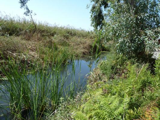 watergang bij Zacharomeer