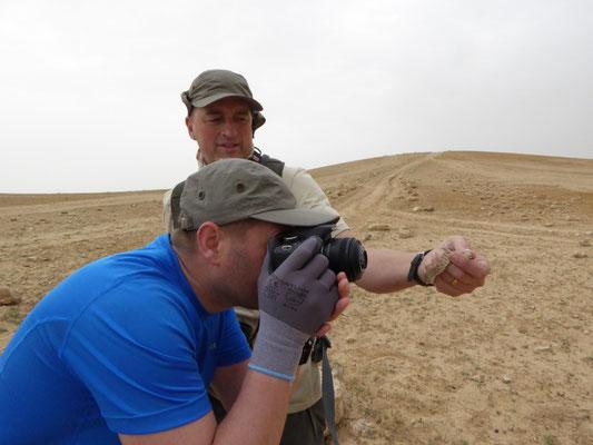Marcel fotografeert Diadeemslang (Spalerosophis diadema cliffordii)