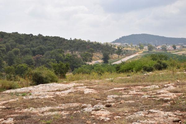 succesvolle weide op Mount Gilboa