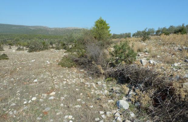 nabij Saronikos Kolpos