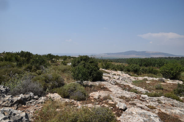 topbiotoop Mount Gilboa