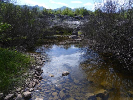 locatie van de kleine watersalamanders