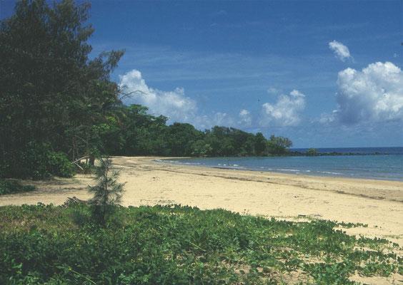Mission Beach Rainforest Walk