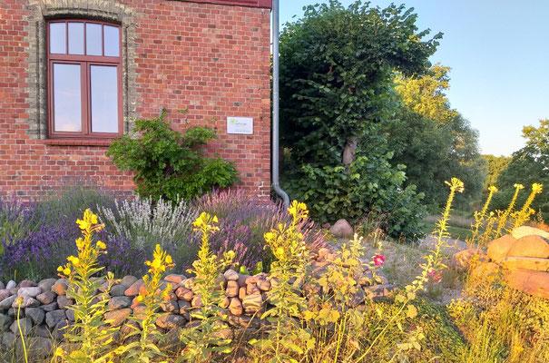 Nachtkerzen und Lavendel am Herbergs-Altbau (07_2020)