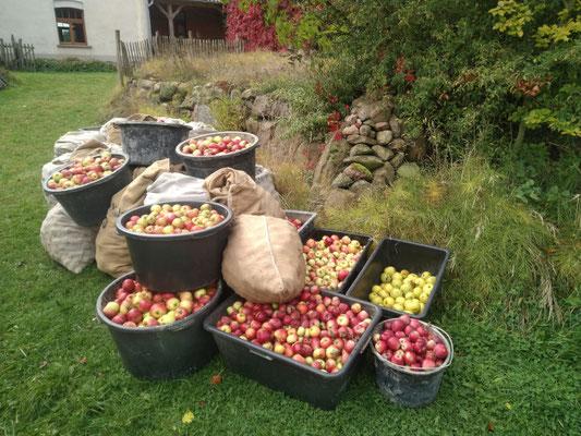 """Apfelmosten-Aktion in der """"Herberge am kleinen Weingarten Dahrendorf""""_11"""