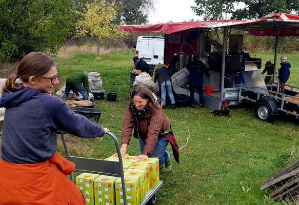 """Apfelmosten-Aktion in der """"Herberge am kleinen Weingarten Dahrendorf""""_09"""