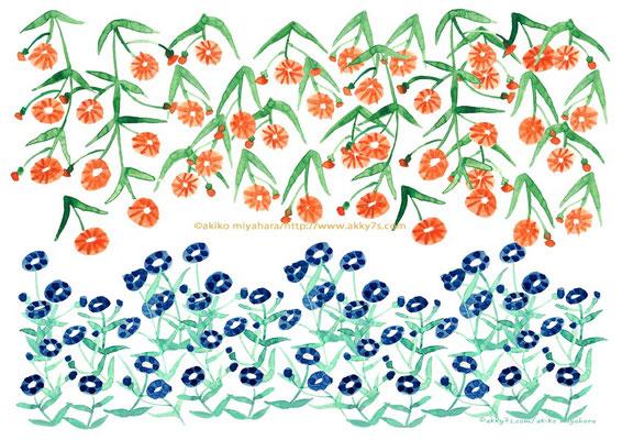 植物/青とオレンジの花