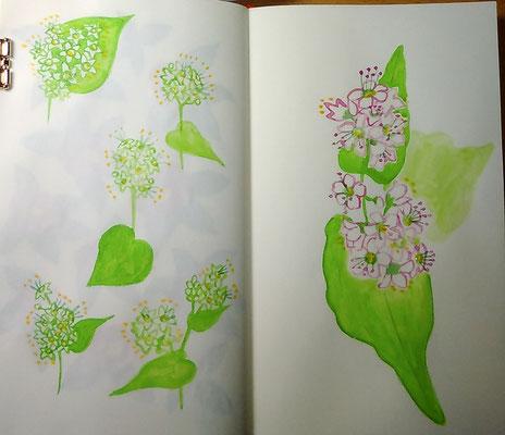 そばの花。