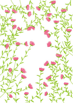 植物/ピンクの小花
