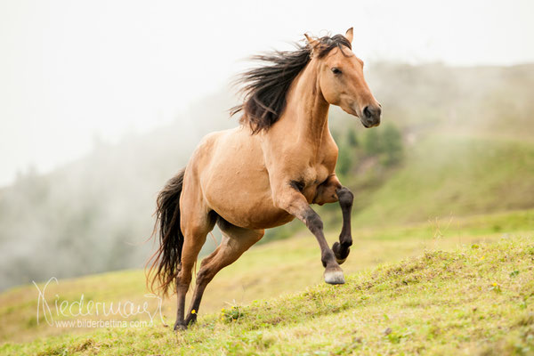 pferd mensch baby