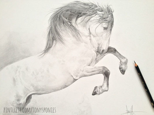 https://www.facebook.com/pages/Tony-O-Connor-Equine-Art/275031255420?fref=photo