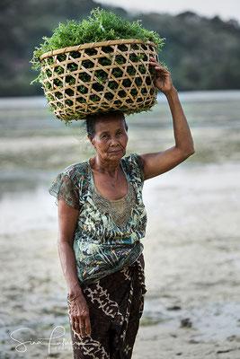 Seaweed farming at Lembongang