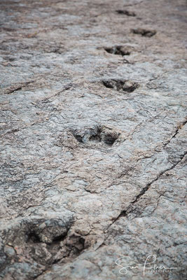 Footsteps of the dinosaurs
