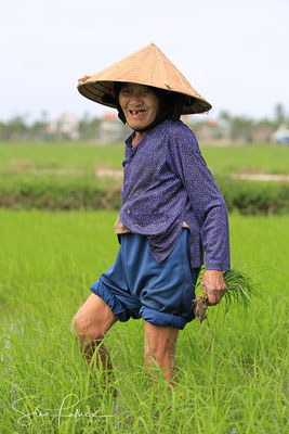 In the rice fields of Hoi An