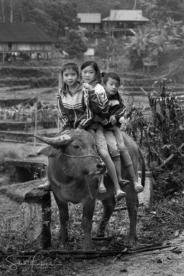 Water buffalo riding in the mountains of Mai Chau