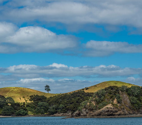 Lone Tree in the Bay of Islands