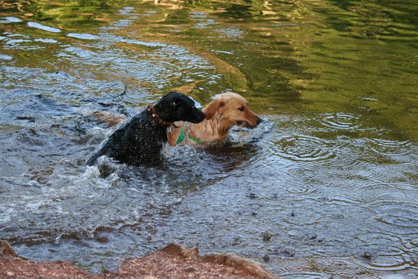 Baden an einem Weiher in Sippersfeld mit Hundefreundin Nala
