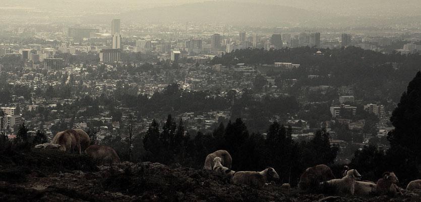 <b>Hélène Verger: Schafe über der Stadt.</b> Aussicht vom Yeka-Berg oberhalb von Addis. Die Schafe sind ein Zeichen dafür, dass Addis noch ländliche Seiten besitzt. Es ist nicht selten, dass Esel, Kühe und Schafe durch die Stadt ziehen.