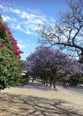 """<b>Abera Minuyelet: Eine von Addis' Alleen.</b> """"Meine Stadt ist wunderschön."""""""