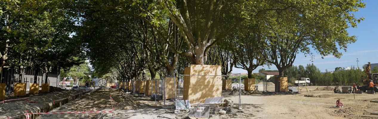 Phase de préparation du chantier - PROTECTION DES ARBRES EXISTANTS