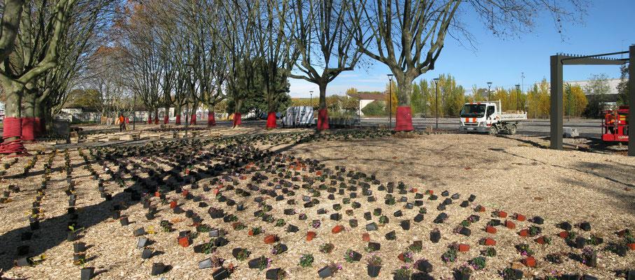 Phase de plantation sous le mail des plantane existants