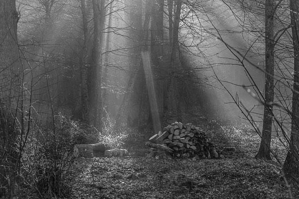 """""""Waldstimmung"""" von Waltraud Wiget, 1. Platz (01.2019)"""