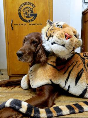 tiger Verkleidung Fasching trendsetter wildlife schubladenschrank göggingertiger loft style irishsetter irischersetter irishred geschenke
