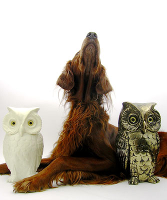 irish setter trendsetter hunting dog owls interior designer design classics sophisticated nature animals glamorous hollywood