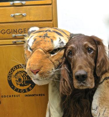 tiger Verkleidung Fasching trendsetter wildlife schubladenschrank göggingertiger loft style irishsetter irischersetter irishred