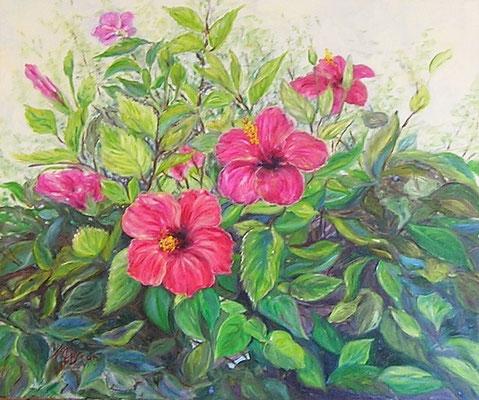 73. Hibiscus O/L 65x55