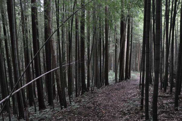 最初は竹林