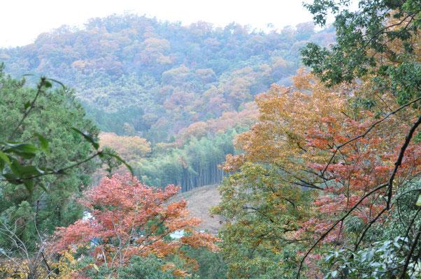 低山紅葉真っ盛り