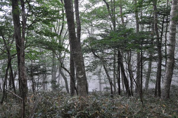ガスって神秘的な森。猿もたくさん