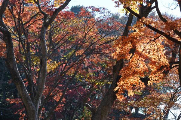 あずまや付近の紅葉。