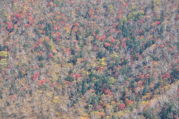 このぐらいの緑、黄、赤色の紅葉50%ぐらいが好きです
