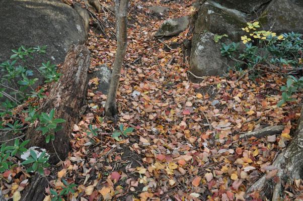 迂回コースは落ち葉が多く、先日雨も降ってかなり滑りました