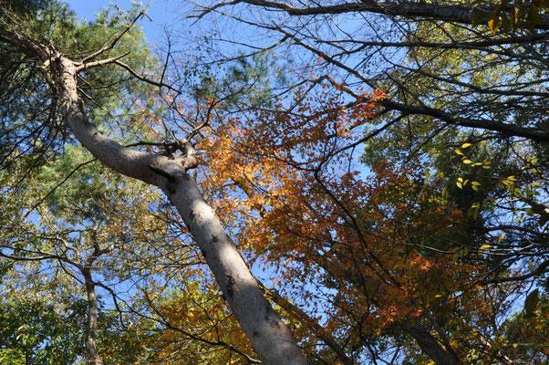 青空と紅葉が綺麗です