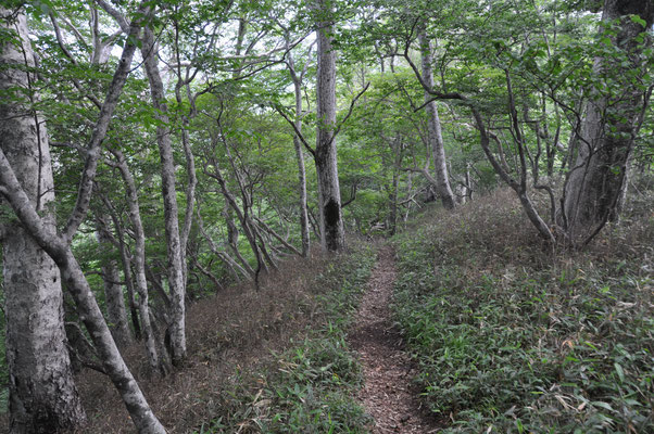 アスナロの森~