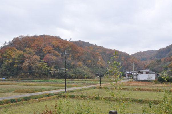 露垂根神社付近の色づいた山肌