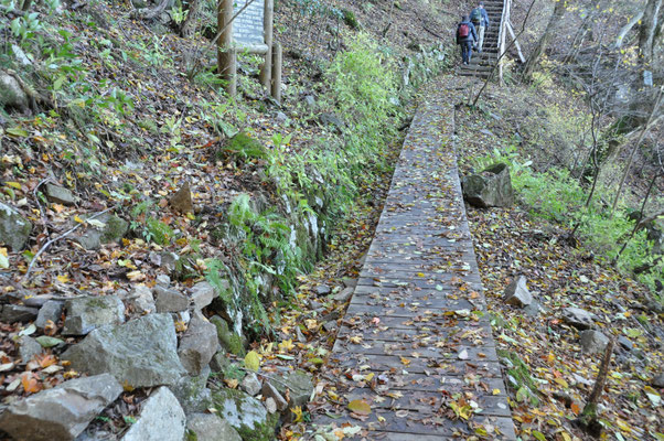 自然研究路途中の木道