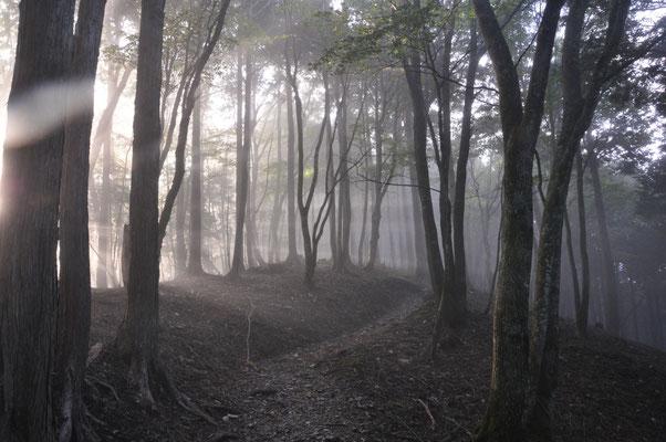 こんな森を歩きたかったんです\(^o^)/