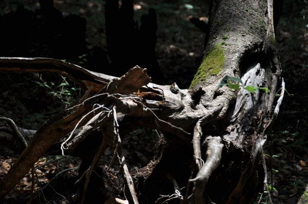深い森に光。幻想的です