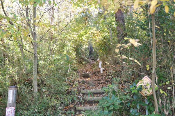 ここから急登の階段。でも途中左側の迂回コースへ